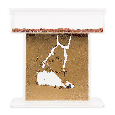 Ant Farm T with free Ants and Queen - Educational formicarium for LIVE ants