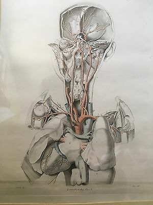 Anatomical Heart, Arteries P/A  Beautiful Hand Coloured Antique Print