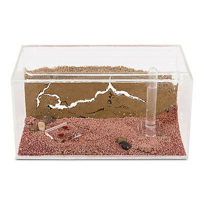 Ant Farm with free Ants and Queen - Educational formicarium for LIVE ants