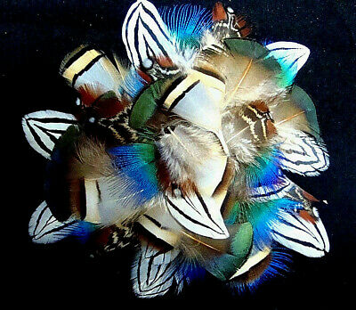 #4 Mix Peacock, Chukar, Amherst, Timminick's Pheasant Plumage Feathers-US Seller