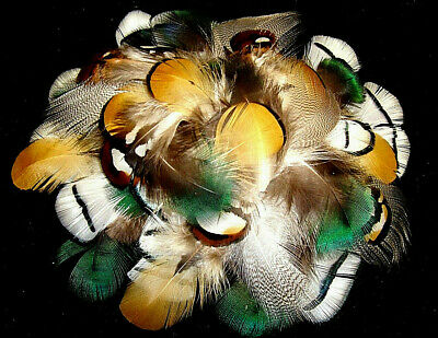 Mix 3 Peacock, Reeves, Amherst Pheasant, Mallard Plumage Feathers-US Seller