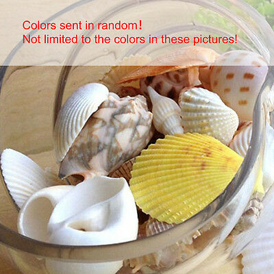 Approx 100g Beach Mixed SeaShells Sea Shells Shell Craft Table Decor Aquarium