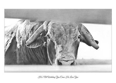"""He's Not Watching You Cause He Loves You"" 5X7 Mini Print ROBYN COOK~PBR Bull~"