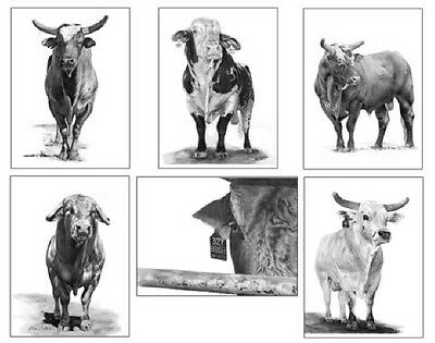 PBR Bull Series I Notecards Set of 6 Different Images~ROBYN COOK PENCIL ARTIST~
