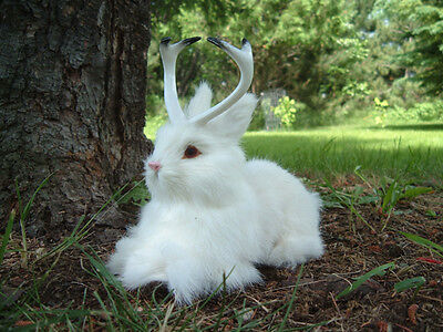 Realistic JACKALOPE RABBIT FUR TAXIDERMY REPLICA Toy 1802wh FREE SHIPPING USA