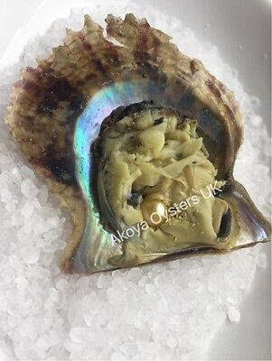 AKOYA OYSTERS **GOLD** x 5 : IN STOCK