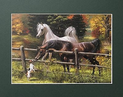 New Matted Gray Black Arabian Horse Print Jack Russell Dog Mary Haggard