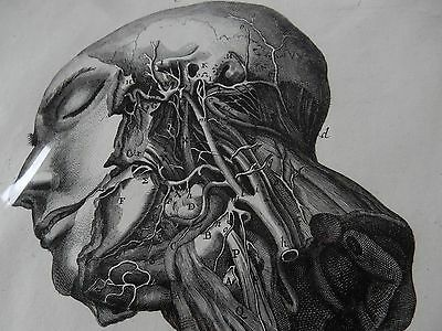 DOCTOR SURGEON ANATOMICAL  superb  mounted Late 1700s engraving GIFT POTENTIAL k