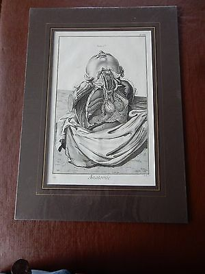DOCTOR SURGEON ANATOMICAL superb mounted Late 1700s engraving GIFT POTENTIAL ax