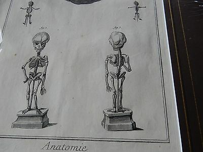 DOCTOR SURGEON ANATOMICAL superb mounted Late 1700s engraving GIFT POTENTIAL ab