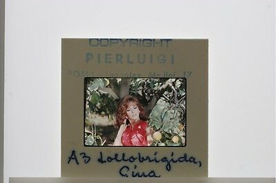 35mm Slide of Gina Lollobrigida posing in a tree.