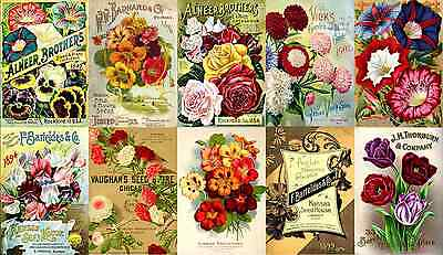 Print & Sell 350+ Stunning 'Print Ready' Vintage Seed Packet/Catalogue Covers