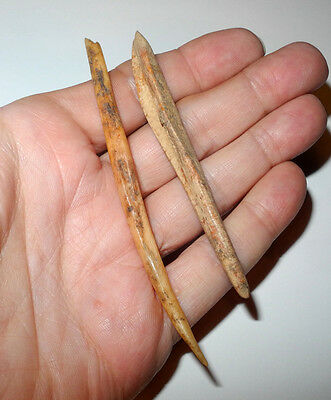 PRE-COLUMBIAN Bone Awls - ARCHAIC to WOODLAND - Hawkins Co Tennessee - 4000 BC.