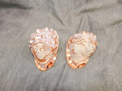 Pair of Hand carved conch shells from Italy .. gorgeous