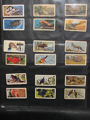 Brooke Bond Canada - lot of 18 - Animals Birds, Series 2,6,7,13 Animals + Young