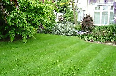 AwesomeYard.com - Premium Landscaping Domain Name - GoDaddy - Over 8 Years Old!