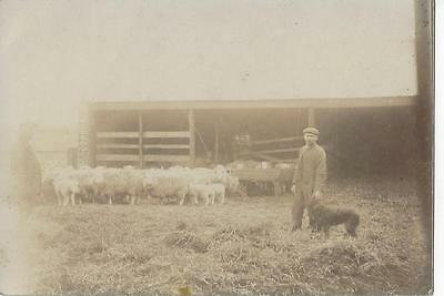 Rural Farming - Shepherd With His Dog & Sheep - Vintage Real Photo Postcard