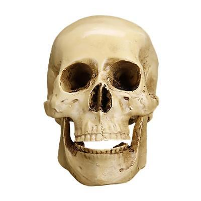 Gothic Human Skull Resin Model Anatomical Medical Teaching Skeleton Ornament