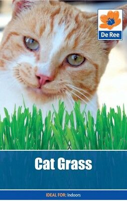 Cat Grass Seeds (approx. 75 seeds)