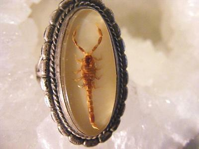 NAVAJO PAWN RING Sterling Silver encased REAL Scorpion Size 8 1950s 1960Ss