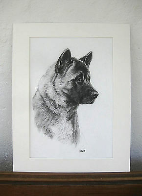 Original Akita Dog charcoal drawing dog art mounted ready to frame by H Irvine