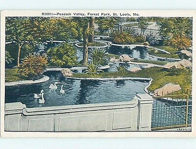 Unused W-Border PARK SCENE St. Louis Missouri MO hk6660