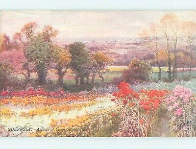 Unused Divided-Back Tuck POSTCARD FROM Guernsey Channel Islands - Uk HM5549