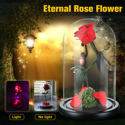 Preserved Flowers Natural Rose Glass Cover Eternal Love Prince/Princess LED Lamp