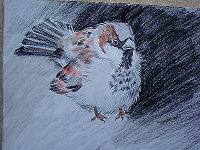 Zeichnung - Original - Buntstifte - SPATZ - Sparrow - Tier - Vogel - Aquarell