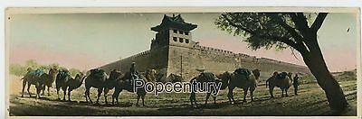 Vintage Photograph China 1930s Peking Peiping Great Wall Camels Colored Photo