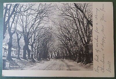 Vintage Postcard, Newlands Avenue, Cape Town, South Africa, Trees, Budricks 1913