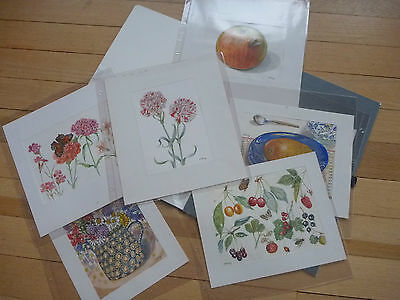 Vintage Botanical Illustrations   WATERCOLOURS F CORAY   SEEGER COLLECTION