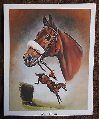 Red Rum Champion Thoroughbred Steeplechaser A4 Print