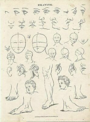 Drawing human forms anatomy 1817 antique engraved print