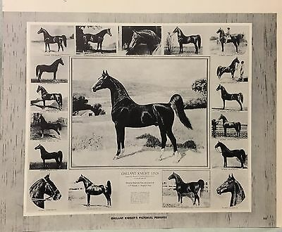 Vintage Gallant Knight's Horse Pictorial Pedigree George Ford Morris 1952 Print