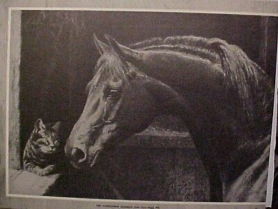 Vintage Godolphin Arabian Horse Cat George Ford Morris 1952 Print