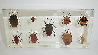 9 Bug Collection Set in clear Block Education Real Insect Specimen