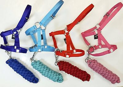 Miniature Non Padded Headcollar/Halter for Foal,Shetland/Pony with Leadrope