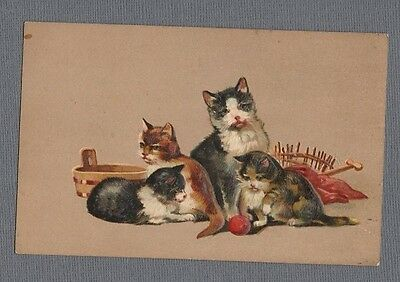 Embossed 1910 Postcard Cat Kittens Sweet Group Bright & Shiny