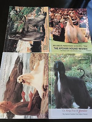 Afghan Hound Review 4 Issues Random Years