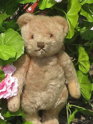 Traum Steiff Teddy US ZONE 25 cm mit US ZONE Restfahne
