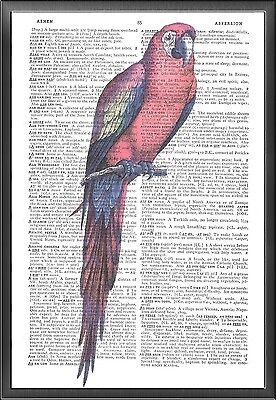 Macaw Altered Art Print Upcycled Vintage Dictionary Page