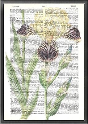 Purple and Yellow Iris Altered Art Print Upcycled Vintage Dictionary Page