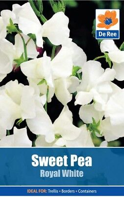 Sweet Pea Royal White Flower Seeds (approx 10 seeds)