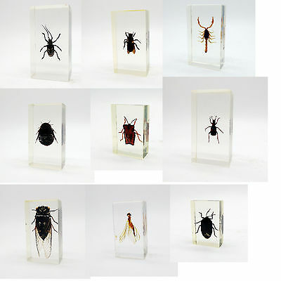 Real Insects Taxidermy Bugs Paperweight in Acrylic Block Resin SHOWCASE
