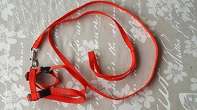 Cat Walking Lead Dog Leash Adjustable Harness Collar Pet Kitten Puppy - Red