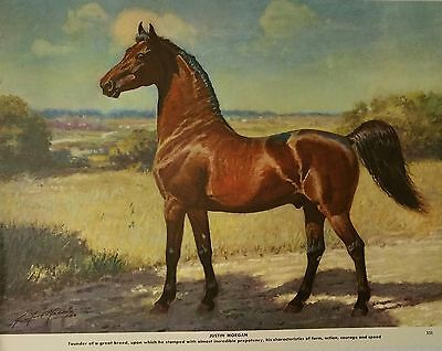 Vintage Justin Morgan Horse Founder Of The Breed George Ford Morris 1952 Print