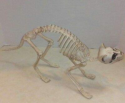 Realistic Cast Resin Cat Skeleton Anatomical Model Life Size