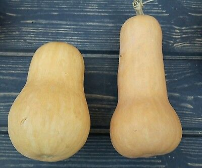 ☺10 graines de courge butternut