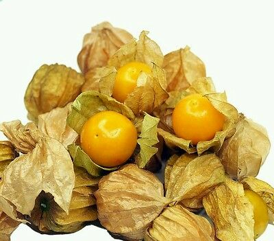 ☺100 graines de physalis orange. lanterne japonaise